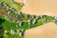 Baumgruppen zwischen Feldern nördlich von Mei�en im Bundesland Sachsen