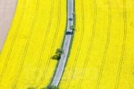 Eine kleine Stra�e verläuft durch ein blühend gelbes Rapsfeld.