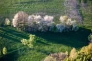 Blühende Baumgruppe auf der Wiese