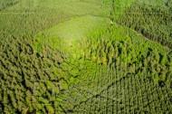 Strudelartiger Nadelwald