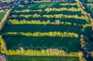 Felder getrennt durch Baumreihen in der Abendsonne