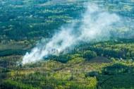 Waldbrand im Landschaftsschutzgebiet im Moritzburger Teichgebiet im Bundesland Sachsen