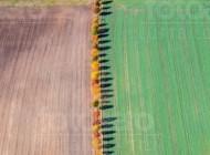Herbstliches Farbspiel mit Felder und Baumallee