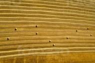 Getreidefeld mit Heuballen im Sonnenschein
