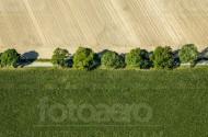 Zwei Felder getrennt durch eine Stra�e und Bäume