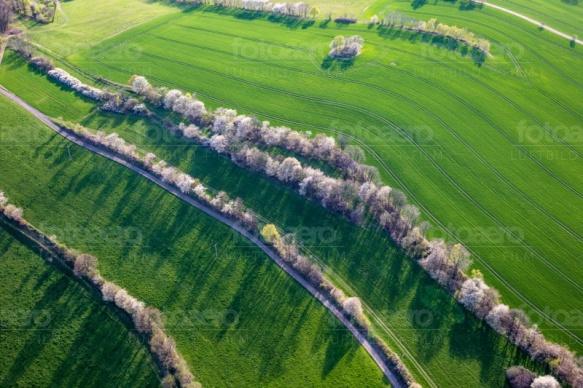 Wiesen und Felder getrennt von Baumalleen