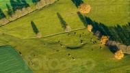 Wiesenland mit Kuhherde und Baumalleen