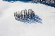 Baumgruppe im Feld im Winter